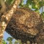 Detenido un hombre en Buñol por robar 40 enjambres de abejas