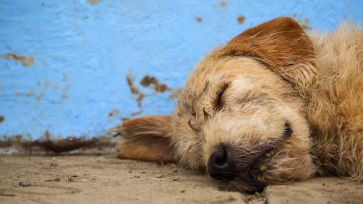 El 2º Festival Solidario Animal llega a la Violeta el sábado 11 de julio