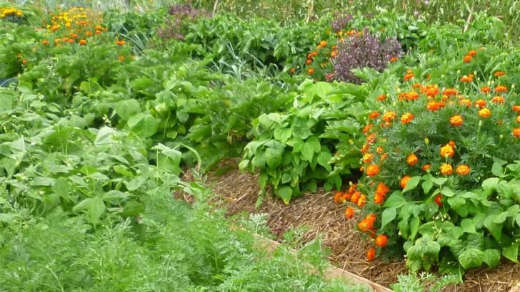 """La """"Huerta-Jardín del Boticario"""" de Macastre ofrece una charla para la creación de un grupo de consumo de verduras ecológicas"""