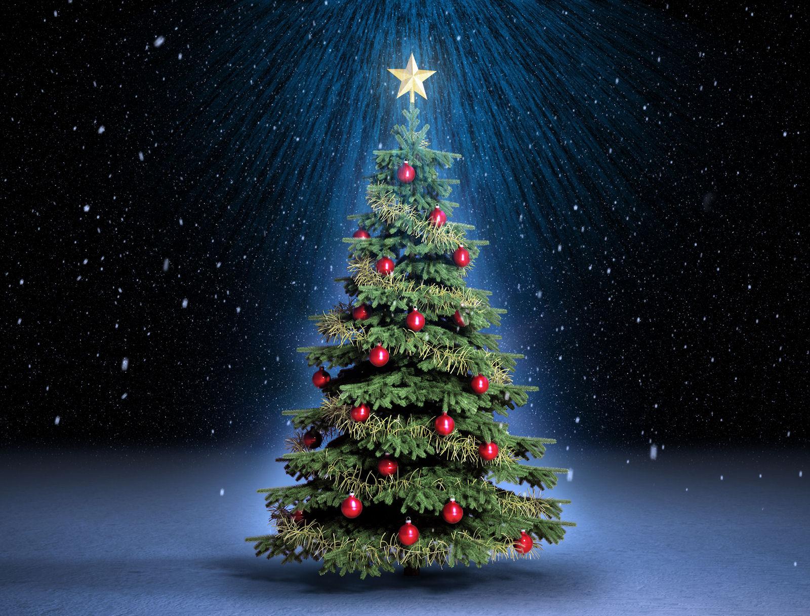 El ayuntamiento de bu ol invita a los vecinos a decorar el - Arbol de navidad fotos ...