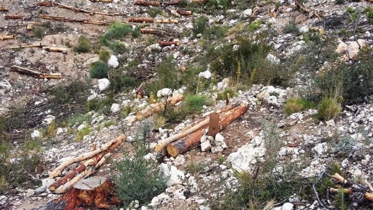 Chiva reforesta la zona quemada de Sierra Perenchiza