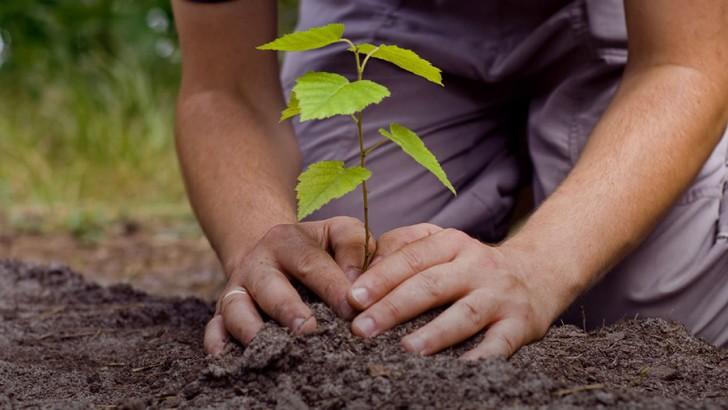La revolución de los árboles