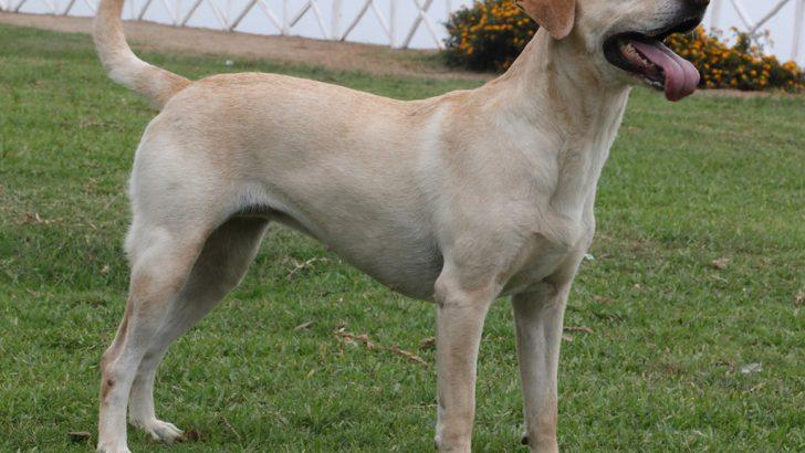 Cheste pone en marcha la segunda fase de la campaña de identificación de mascotas