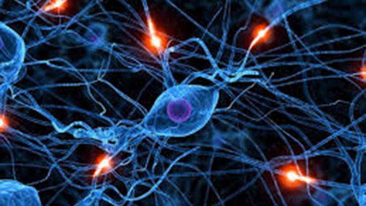 """""""Los tres cerebros"""" que afectan nuestro comportamiento y nuestra salud"""