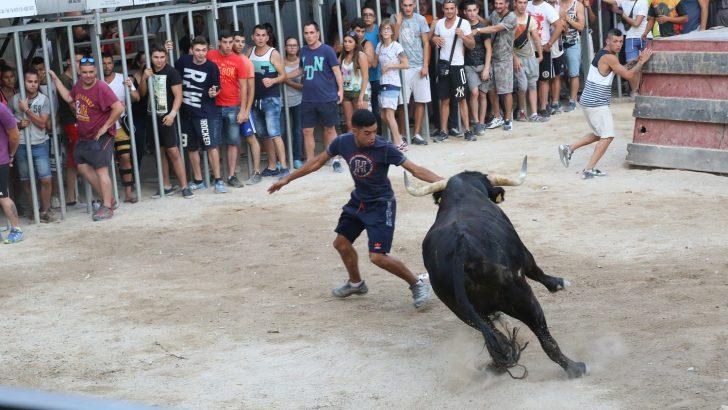 Los toros toman el protagonismo en Cheste con la Semana de la Peña Taurina