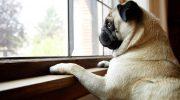 Qué necesitamos cuando vamos a traer una mascota a casa