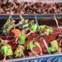 """Buñol ofrecerá paquetes turísticos para """"La Tomatina"""""""
