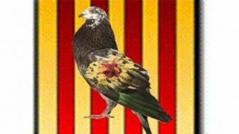 El Club de Colombicultura de Buñol organiza el Campeonato Inter 7 Ventas