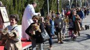 Las imágenes de la festividad de San Antón en Buñol