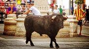 Ayuntamiento, comerciantes, empresarios y aficionados dan continuidad a los festejos taurinos en Macastre